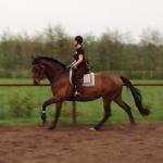 Galdina Training