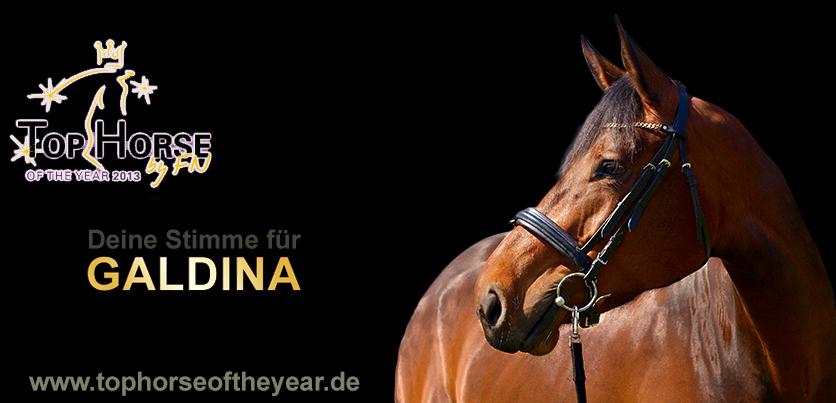 Galdina – Top Horse Of The Year 2013