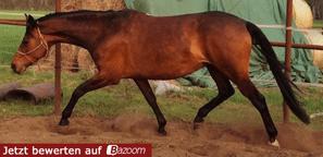 Jetzt für Galdina auf pferde-bazoom.com abstimmen